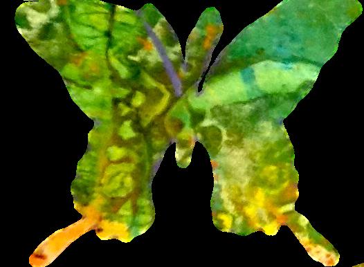butterflymoojan