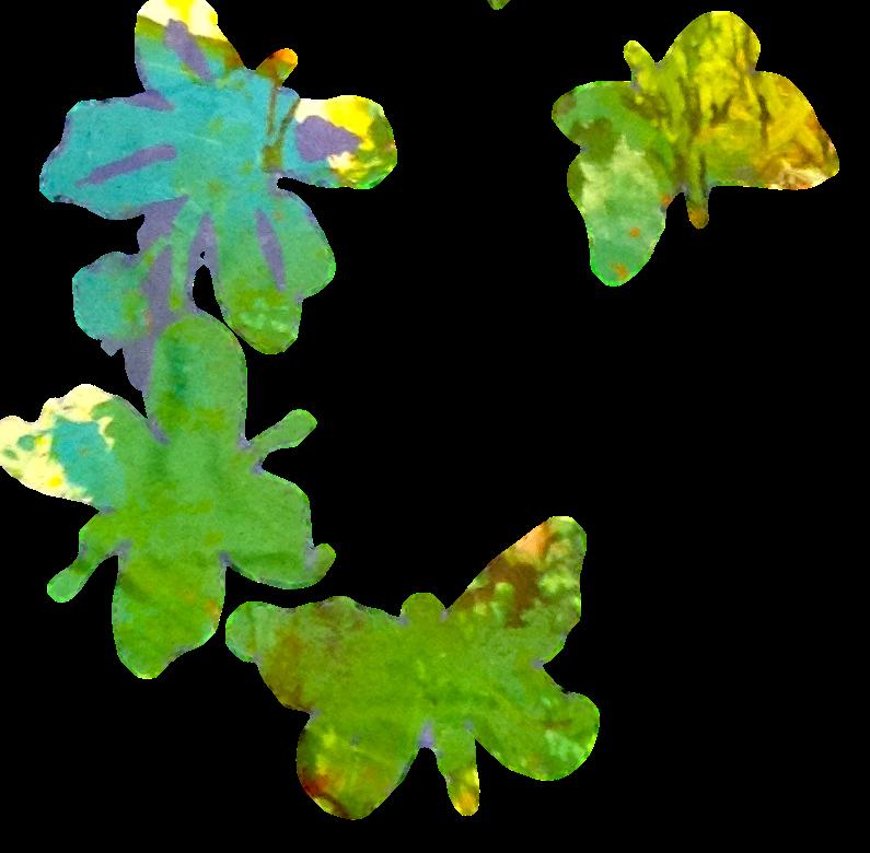 moojanbutterflies1